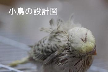 IMG_2628両羽衣ファロー.jpg