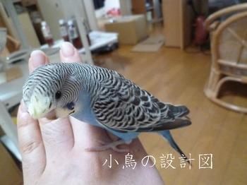 P1040640羽衣spファロー.jpg