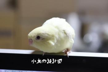 クレミノ.jpg